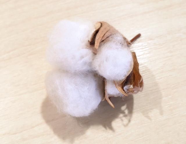 綿花について